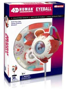 HUMAN EYEBALL ANATOMY MODEL 32PARTS W/STAND & ASSEMBLY GUIDE