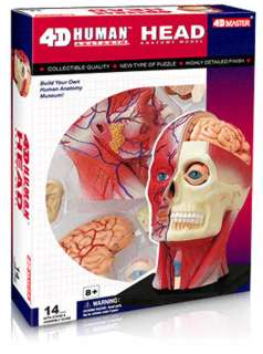 HUMAN HEAD ANATOMY MODEL 14PARTS W/STAND & ASSEMBLY GUIDE