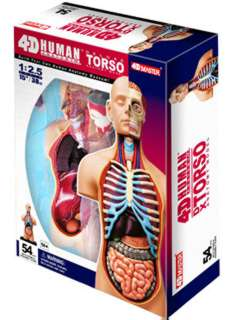 HUMAN TORSO ANATOMY MODEL 54PARTS W/STAND & ASSEMBLY GUIDE