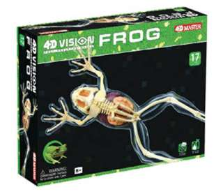 FROG SKELETON MODEL-AGES 8+ 4D-VISION