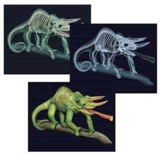ANIMAL X-RAY CARD TILT & VIEW SCIENCE DOUBLE SIDED ASSORTED
