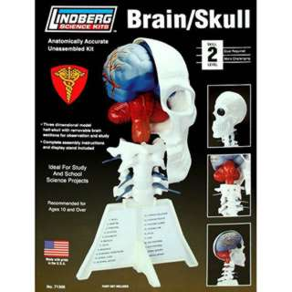 HUMAN BRAIN/SKULL ANATOMY MODEL LINDBERG UNASSEMBLED